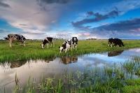 Nederlander voor behoud veenweidelandschap